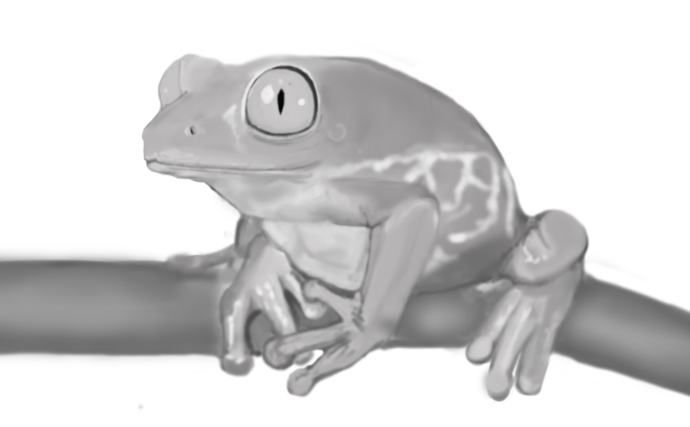 Tree Frog Rough Painting